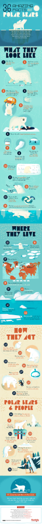insane-facts-about-polar-bears.png