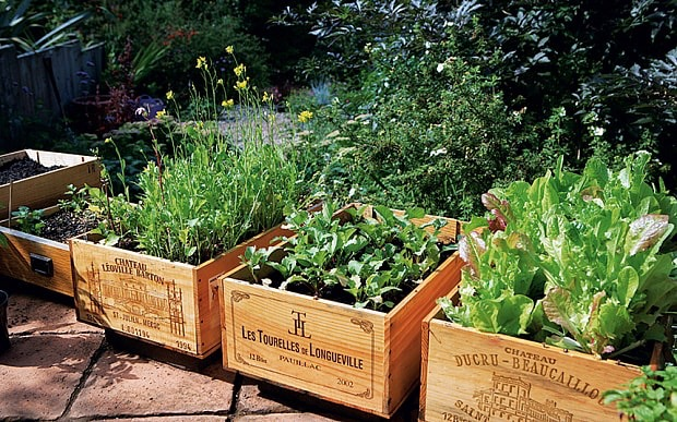 Nothing Wasted - 6 Ways to Develop Your Garden Into an Eco-Friendly Paradise